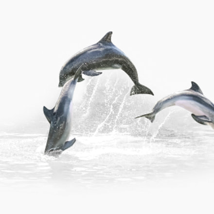 Three Dolphin jumping, Canon EOS 550D, Canon EF-S 18-55mm f/3.5-5.6 IS