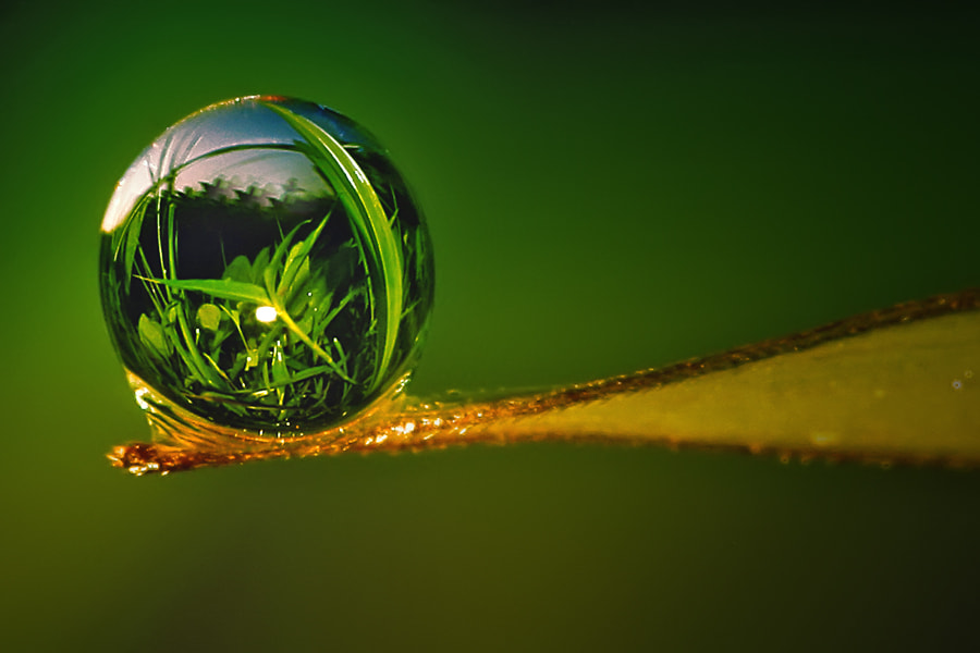 Photograph Crystal Dew by teguh santosa on 500px