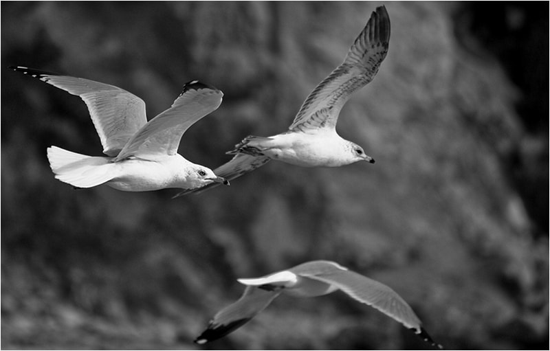 Photograph Fly with Me 3 by Mirza Ajanovic on 500px