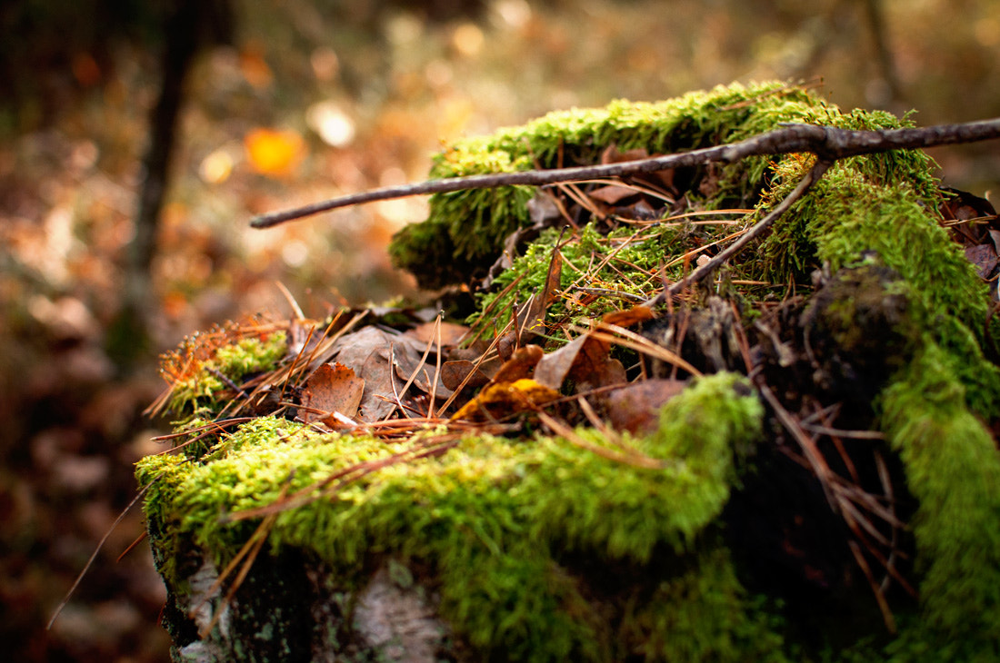 Photograph Forest macro by Roman Chupryna on 500px