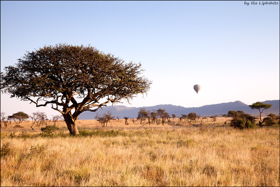 Landscapes of Serengeti №16