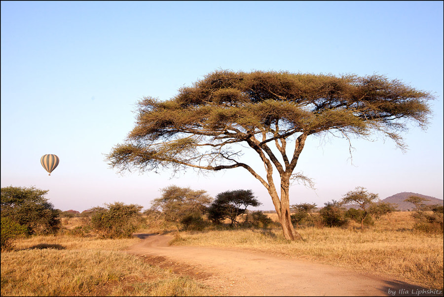 Landscapes of Serengeti №17