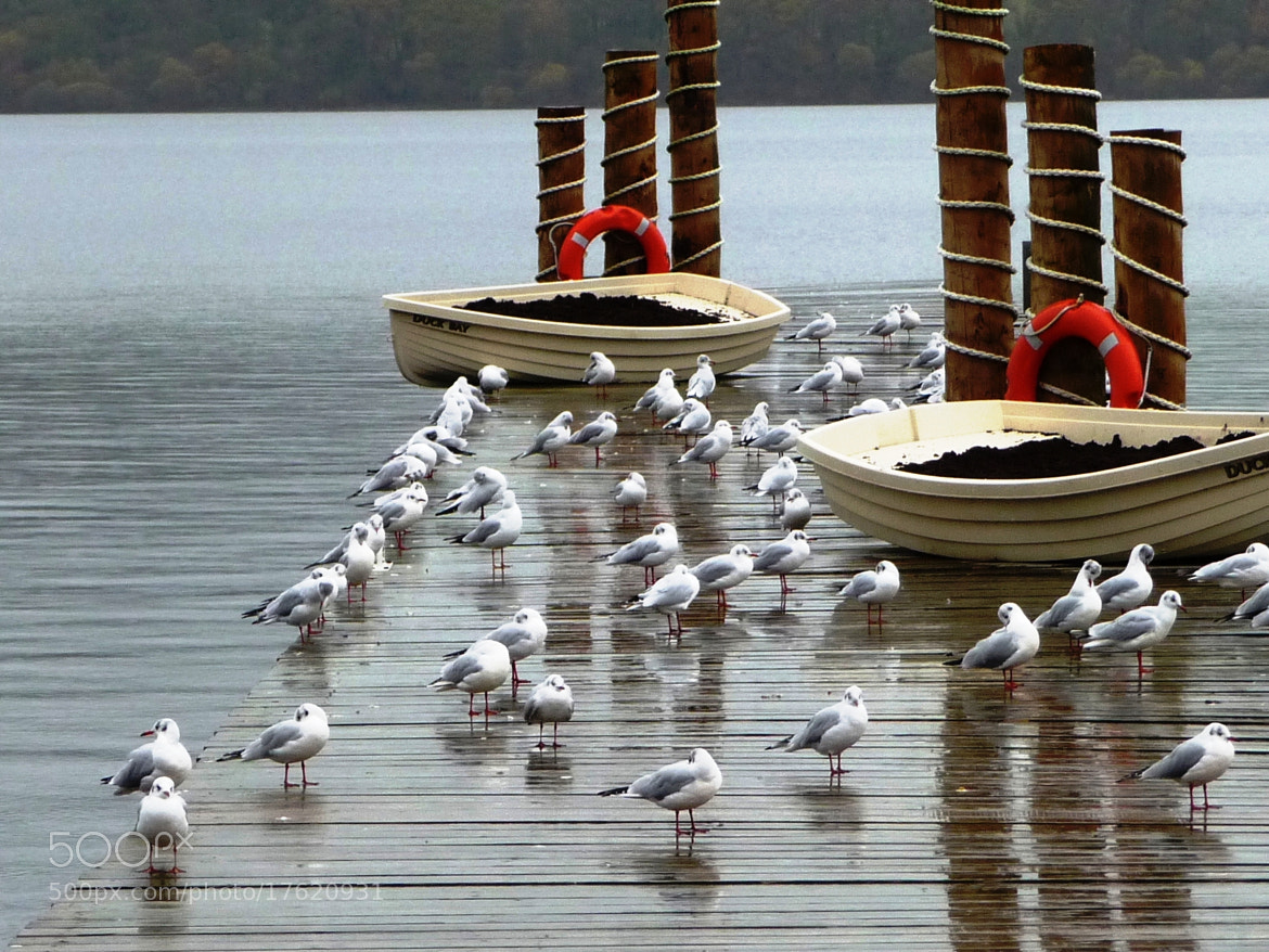 Photograph SEAGULLS by Gilles Gouin on 500px
