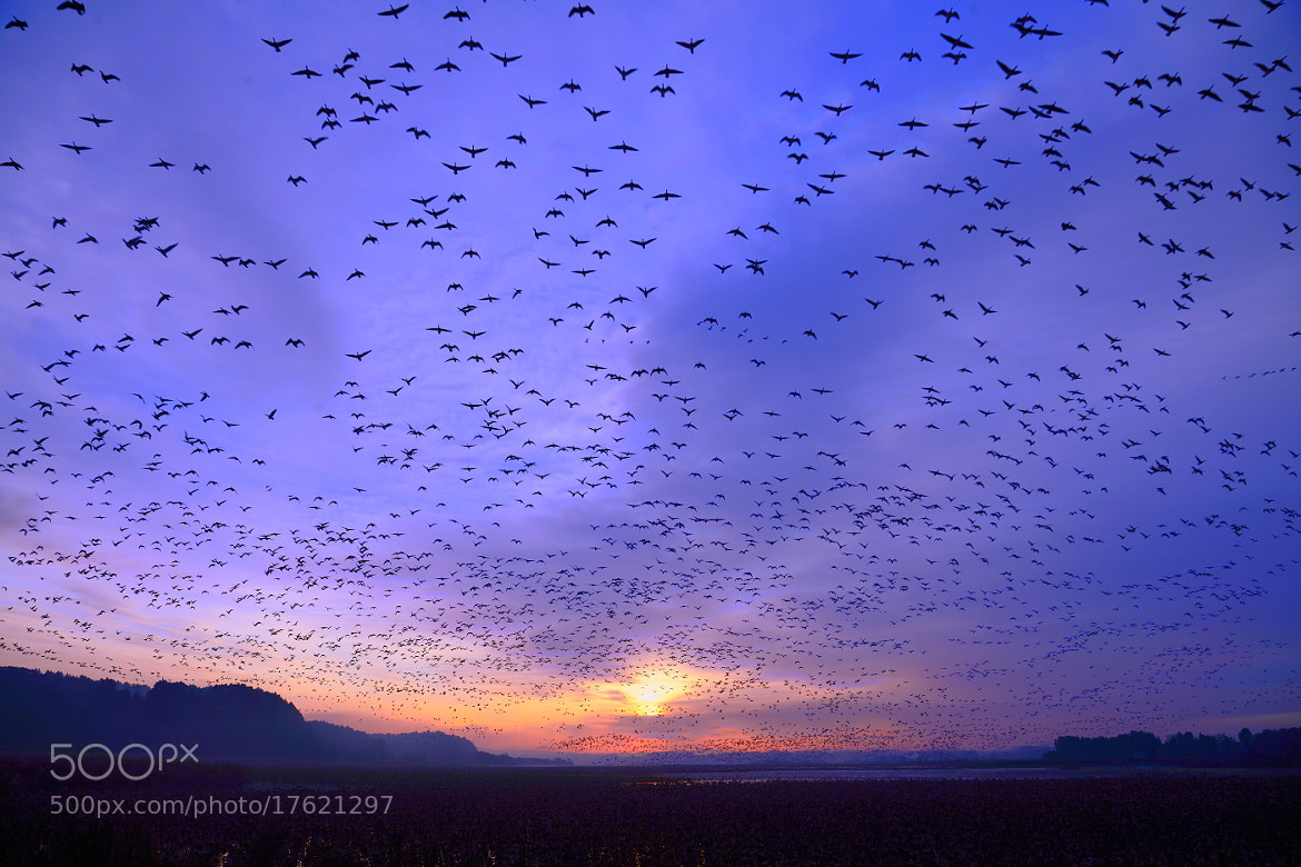 Photograph Excitement Dawn by yume . on 500px