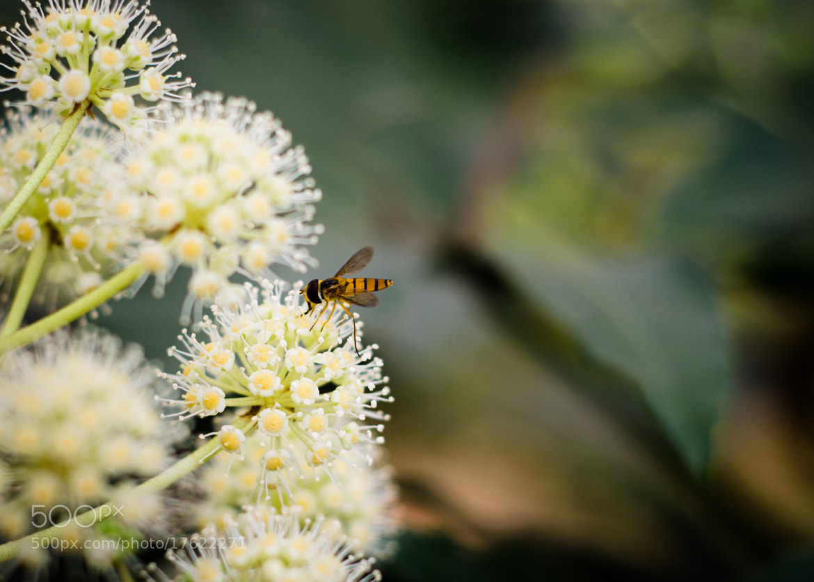 Photograph Bee by Soleil Neon on 500px