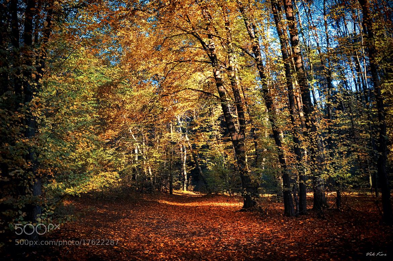 Photograph autumn forest* by Viktor Korostynski on 500px