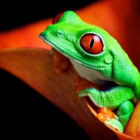 red eye by Mark Bridger on 500px.com