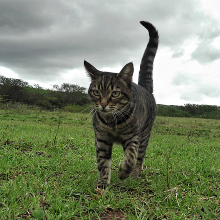 Cat in field, Fujifilm FinePix L30