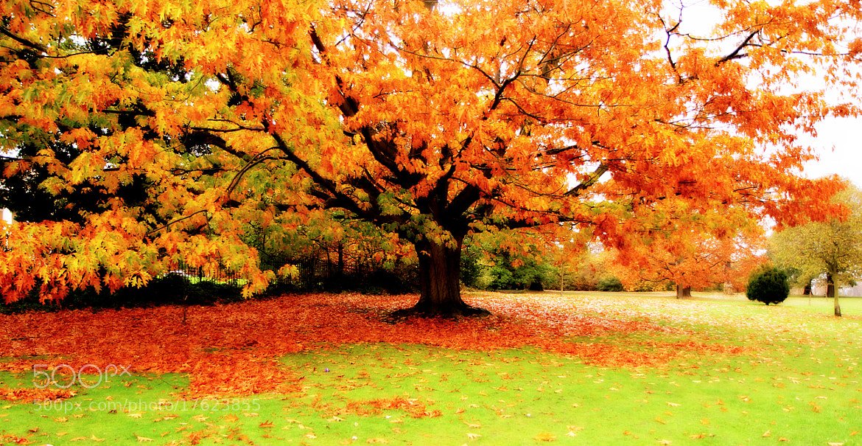 Photograph Autumn 2012 by Emin Kucuk on 500px