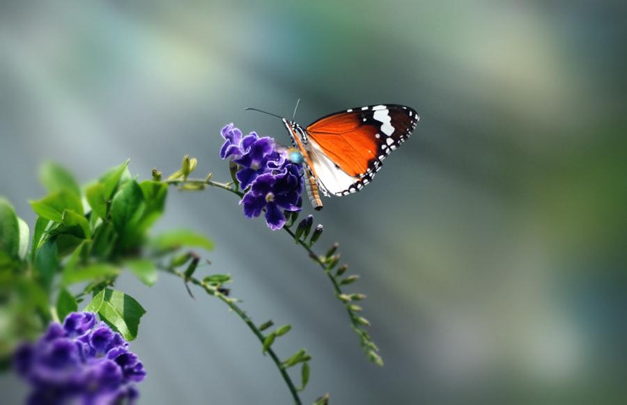 Photograph Butterfly n Bee by Khoo Boo Chuan on 500px