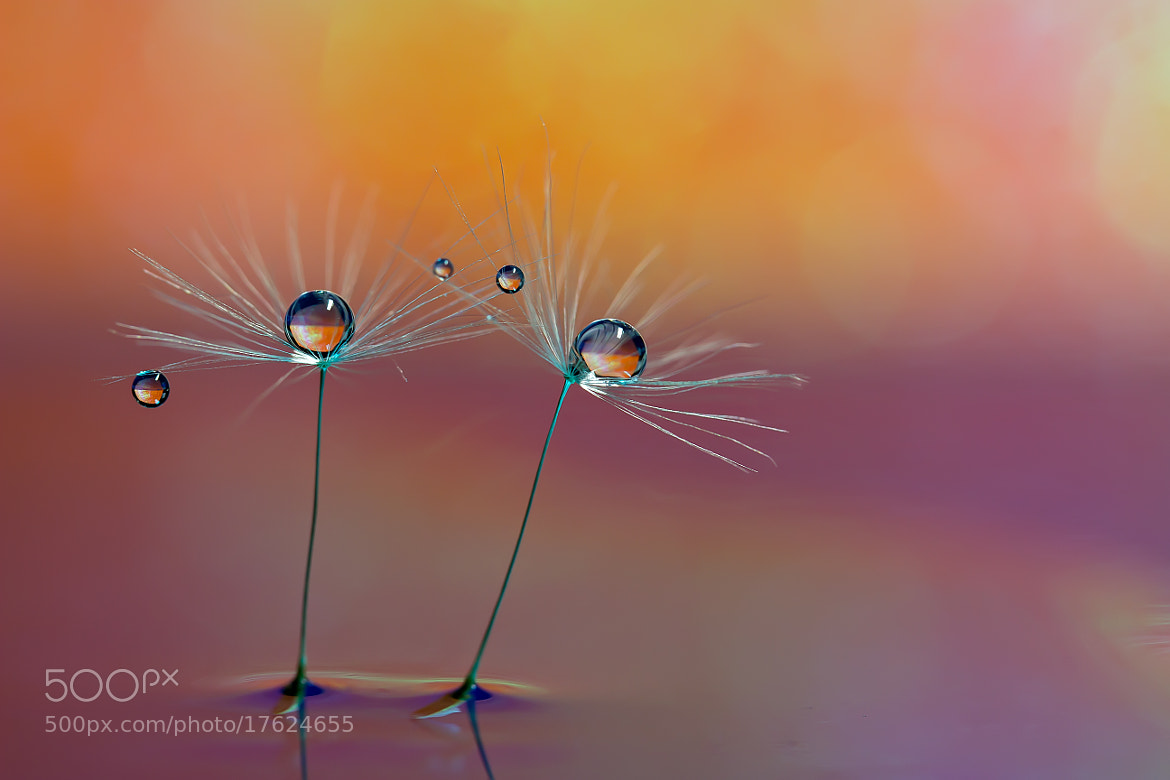 Photograph Warm feeling by Miki Asai on 500px