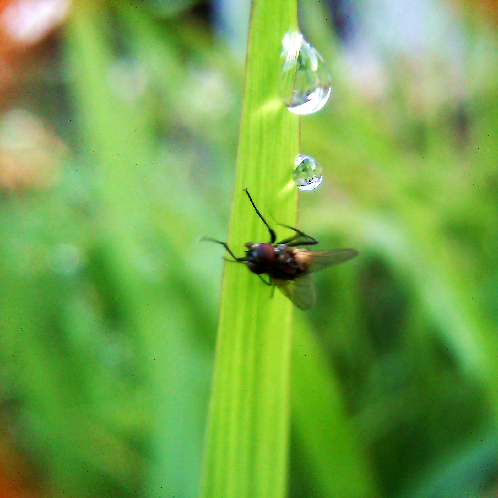 Photograph watch out the dew.. by Ariokh Thio Gunadi Purba on 500px