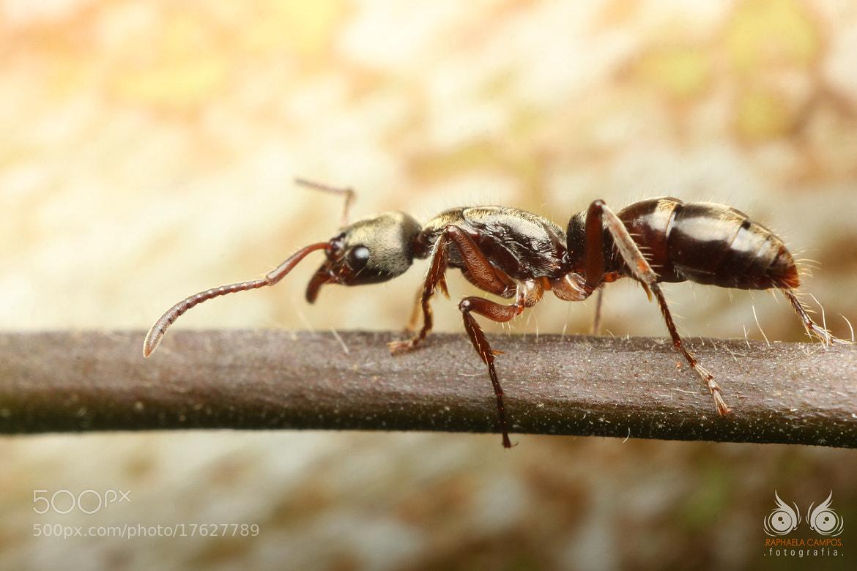 Photograph Ant by Macro Vida on 500px