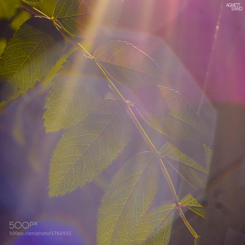 Photograph sun green two by Alexandra Puchkova on 500px