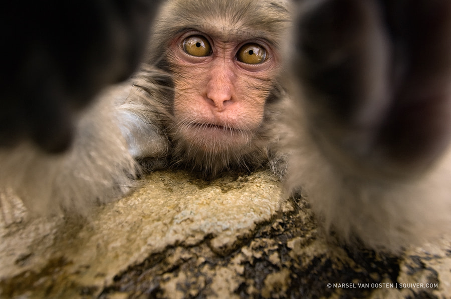 Photograph Lens Inspection by Marsel van Oosten on 500px