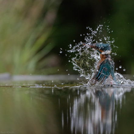 splash, Canon EOS 5DS, Canon EF 200-400mm f/4L IS USM