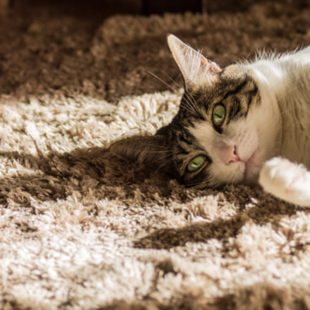 Sunbathing on the carpet, Canon EOS 1100D, Canon EF 75-300mm f/4-5.6 IS USM