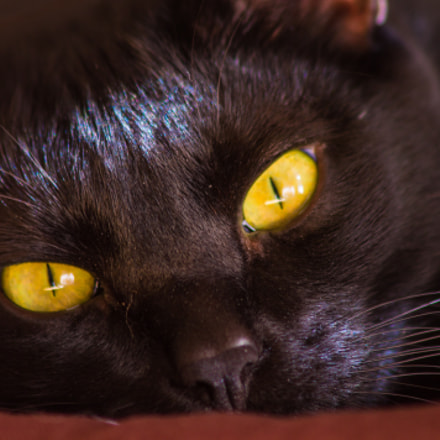 Penetrating eyes, Canon EOS 1100D, Canon EF 75-300mm f/4-5.6 IS USM