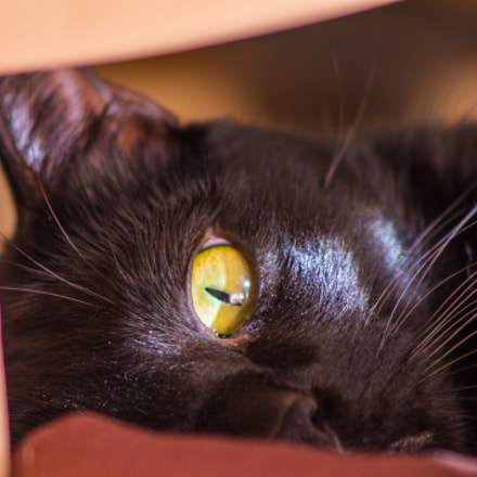 Black cat one eyed, Canon EOS 1100D, Canon EF 75-300mm f/4-5.6 IS USM