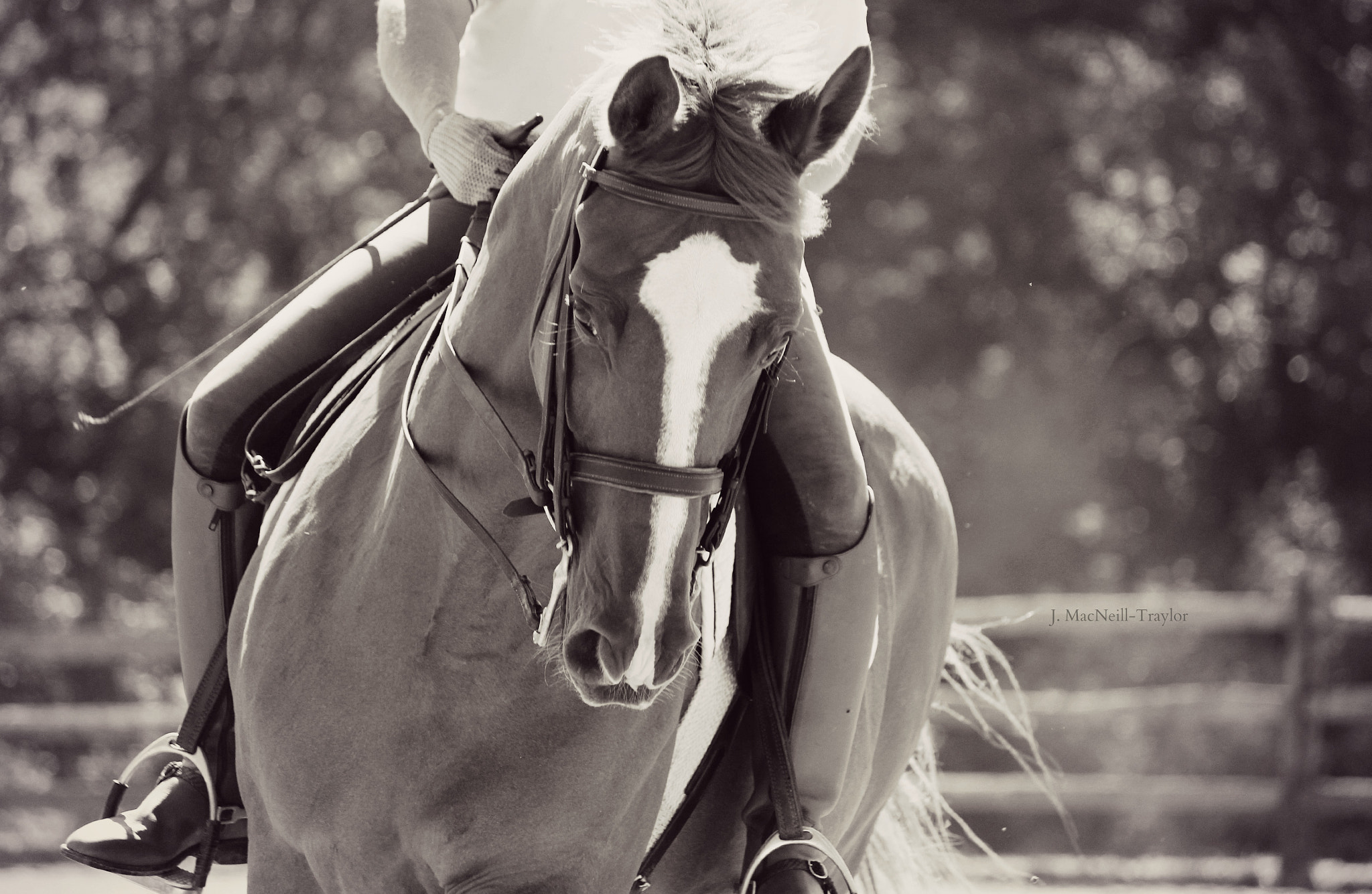 Photograph dressage practice by Jennifer MacNeill on 500px