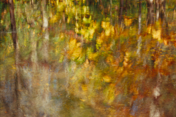Photograph Autumn Abstract by Jim Cole on 500px