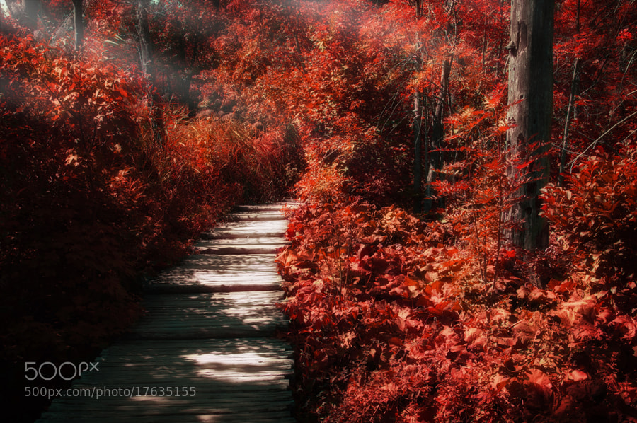Photograph Just a walk in red by Laszlo Gal on 500px