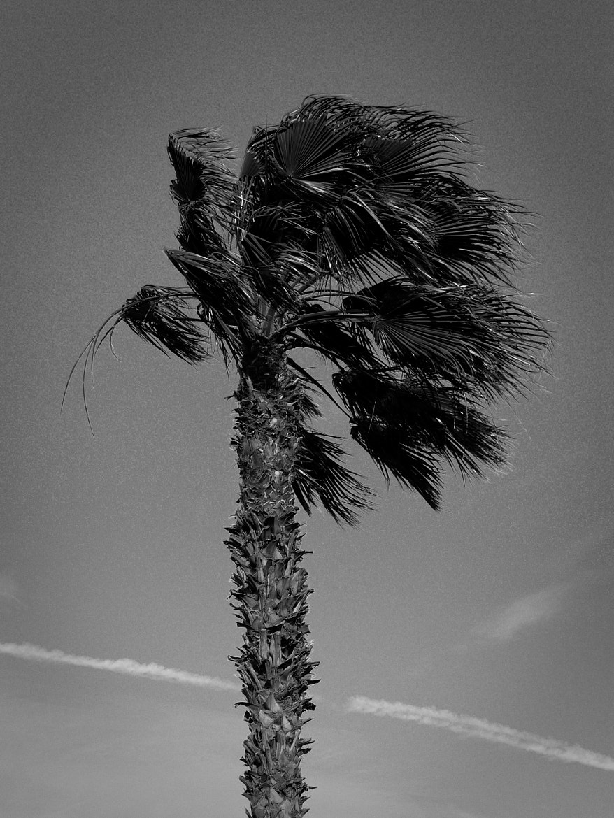 Photograph Palm Tree by Oliver Westphal on 500px