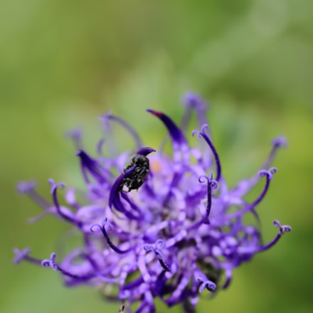 Learning to fly, Canon EOS 7D, Canon EF-S 60mm f/2.8 Macro USM