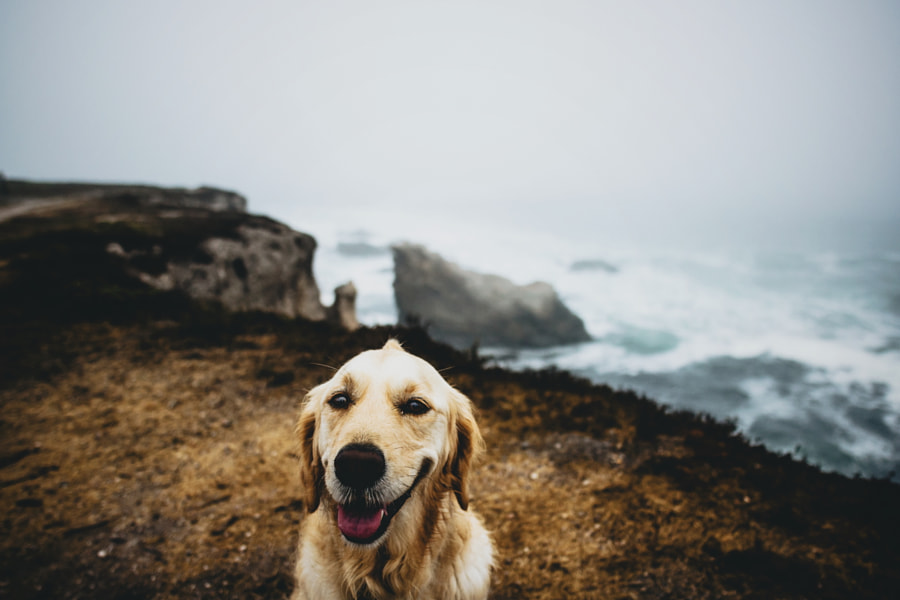 coast dog by Sam Brockway on 500px.com