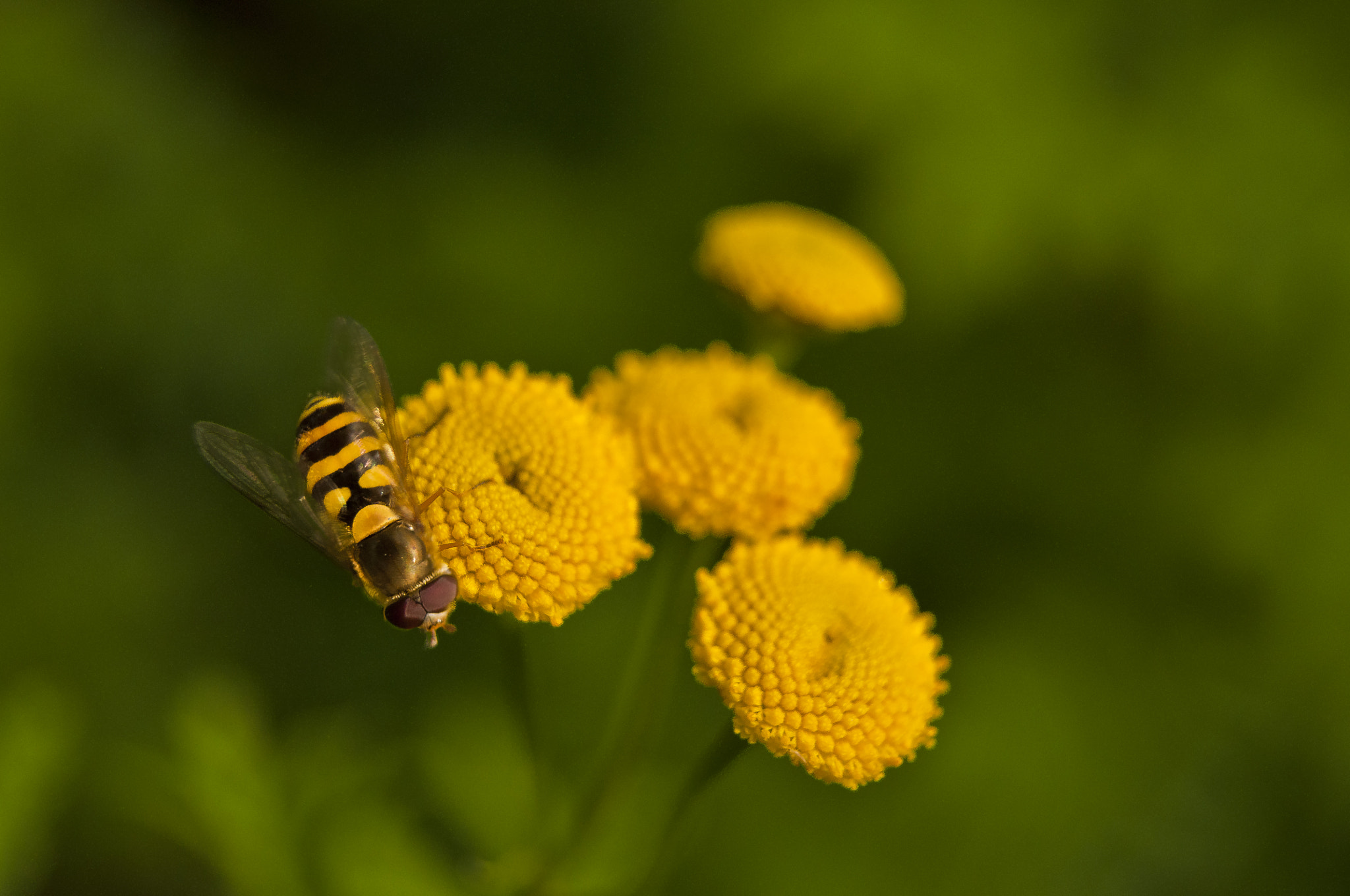 Photograph Yellow fly by Jan Westman on 500px