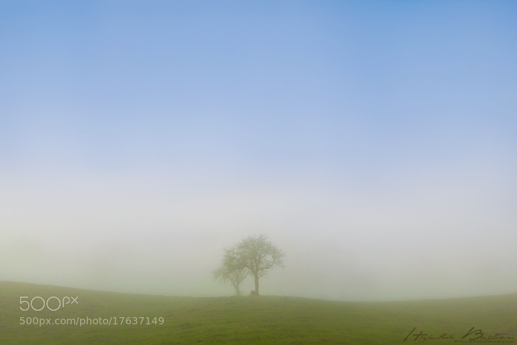 Photograph Morning whispers by Bastien HAJDUK on 500px