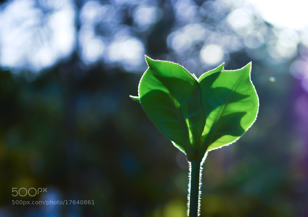 Photograph Light & Shadow by Girinath G on 500px