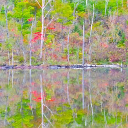 Reflection of colored leaves, Canon POWERSHOT S120