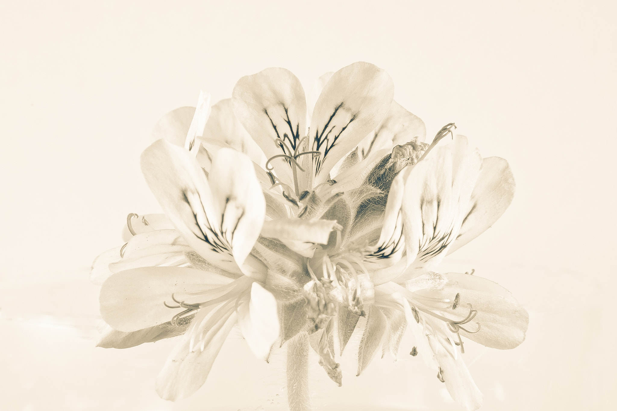 Photograph Flower in Disguise by Mark Hyland on 500px