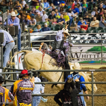 Bull Riding Contest in, Canon EOS-1D X MARK II, Canon EF 100-400mm f/4.5-5.6L IS II USM