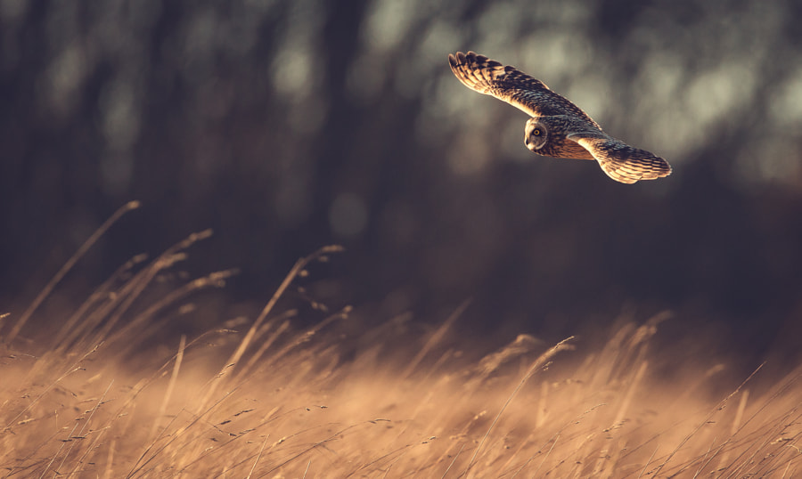 glide... by Mark Bridger on 500px.com