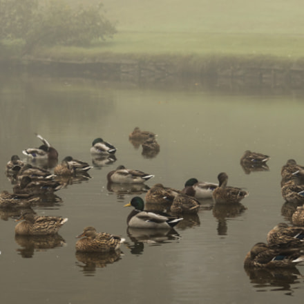 ducks in the fog ..., Canon EOS 70D, Canon EF-S 18-200mm f/3.5-5.6 IS