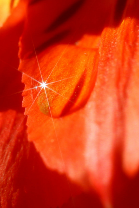 Photograph Diamant by Sonia Preuss Gambier on 500px