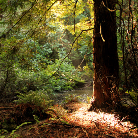 @MuirWoods, Canon EOS 550D, Canon EF-S 18-200mm f/3.5-5.6 IS