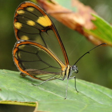 Butterfly in Colombia Chicaque, Canon EOS 1000D