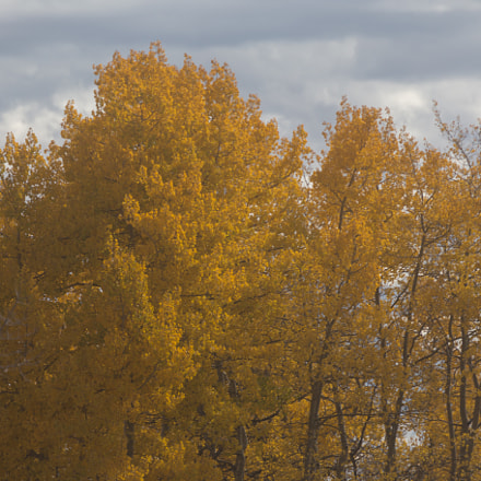 colors, Canon EOS 6D, Canon EF 70-300mm f/4.5-5.6 DO IS USM