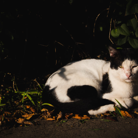 Moody Cat, Canon EOS 700D, Canon EF-S 18-55mm f/3.5-5.6 IS STM