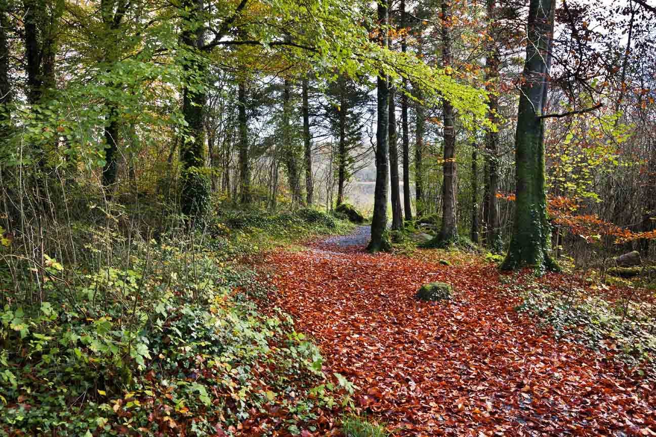 Photograph Path through the woods by Jim Nolan on 500px
