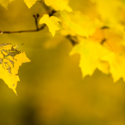 Leaf, Canon EOS 60D, Canon EF 85mm f/1.8 USM