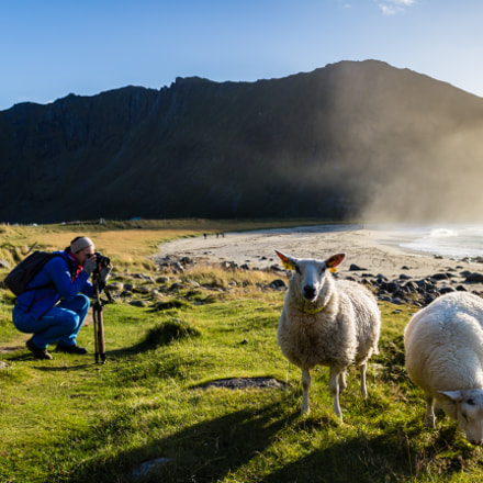 Popular sheeps , Canon EOS 100D, Canon EF-S 18-55mm f/3.5-5.6 IS STM