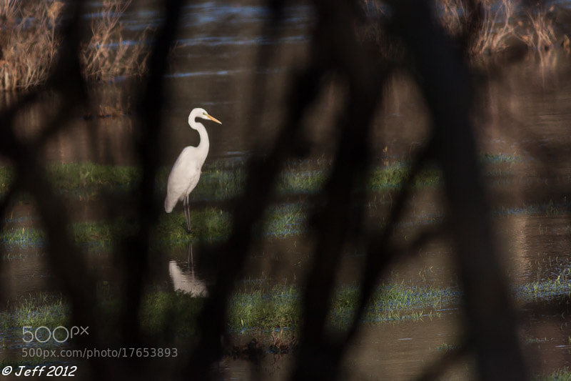 Photograph Aigrette by Bouillet J-Francois on 500px