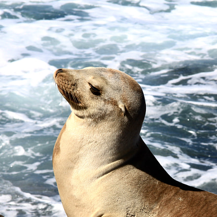 SD Seal, Canon EOS 60D, Canon EF-S 17-85mm f/4-5.6 IS USM