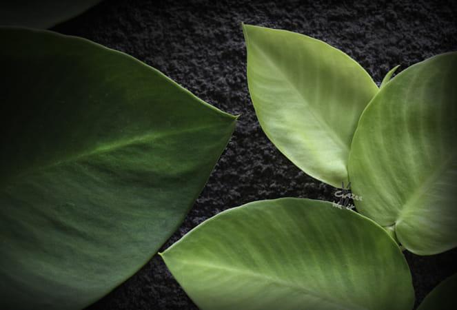leafy greens*