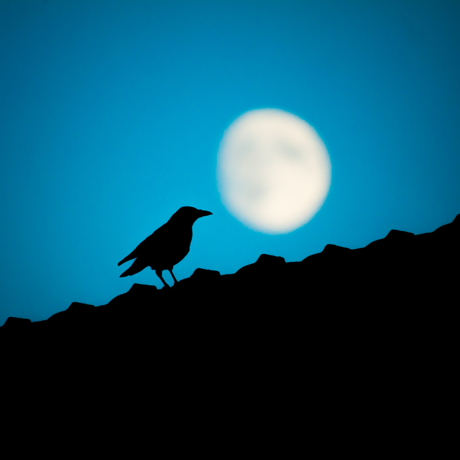 The Crow & The Moon