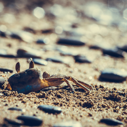 Krebs - crab, Canon EOS 700D, Canon EF-S 55-250mm f/4-5.6 IS II